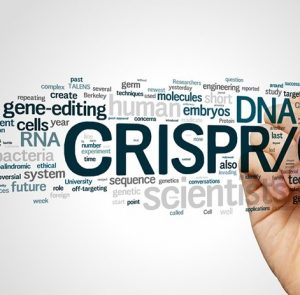 Winelands: Discussion SIG - 'Gene editing'