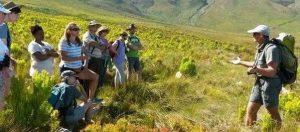 Winelands: Fynbos morning hike