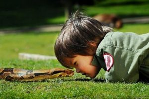 Winelands: Juniors - snake and reptile picnic