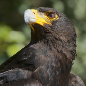 Winelands: Private visit and demonstration - Eagle Encounters